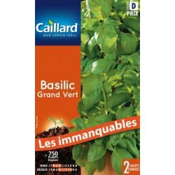Basilic grand vert Aromatiques