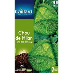 Chou de Milan gros des vertus 4 Légumes