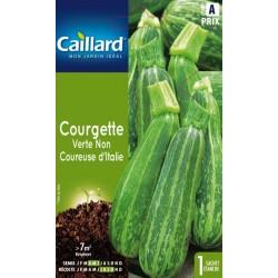 Courgette verte non coureuse d'Italie Légumes