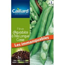 Graines fève d'Aguadulce à très longue cosse Caillard Haricots, pois & fèves