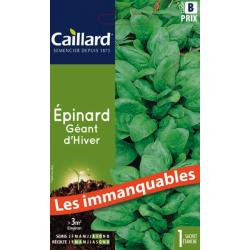Epinard géant d'hiver Légumes