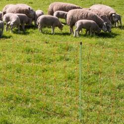 Filet moutons, pointe simple, 90cm, 50m Filets clôtures électriques