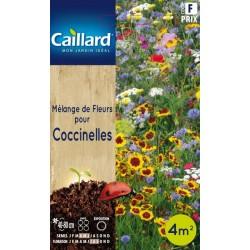 Graines mélange de fleurs pour coccinelles Caillard Fleurs