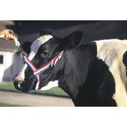 Licol en nylon bleu/blanc/rouge pour vache Colliers, longes et licols